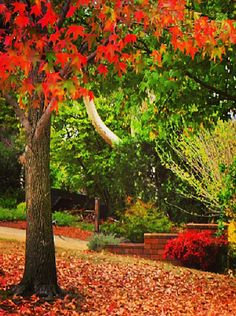 Canberra, Australia in autumn