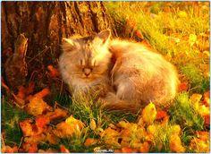 Кот спит  #фото #кошки #кошка #кот #Россия #Серпухов #Тула #Москва #СПБ #осень #год #мир #дети #ребенок #котенок #Самара #Хабаровск #Добро #Екатеринбург #animals #cats #cat #animal #kids #kid #russia #moskow #kitty #pet #pets