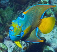 Pretty Fish, Beautiful Fish, Beautiful Sea Creatures, Animals Beautiful, What Animal Are You, Parrot Fish, Water Animals, Underwater Life, Angel Fish