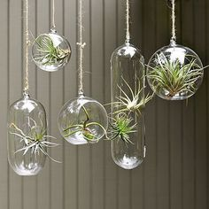 Diamond in the Reef: Hanging Plants for Small Spaces