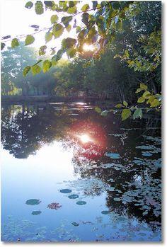 """Morning""; Petit Jean State Park"
