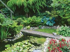 Wildlife Habitats | Water Feature : Garden Galleries : HGTV - Home & Garden Television
