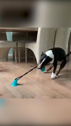 Keep your dog busy for HOURS! Now viewed by over 20 million pet lovers, The Tug Toy™ is the greatest Tug-of-War toy of all time! Just Stick & Go! 🐶 videos to do when bored Dogs LOVE This Toy! Funny Animal Videos, Cute Funny Animals, Cute Baby Animals, Funny Dogs, Animals And Pets, Cute Dogs, Cute Puppies, Cute Dog Toys, Best Dog Toys