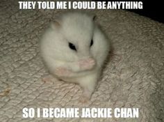 We think becoming Jackie Chan is a very good option for Hamsters and the like.