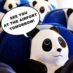 [ Latest Update: 1600 Panda's Hong Kong Tour ] Pandas on the plane! The last batch is expected to arrive tomorrow and will start their Hong Kong's adventure right away. Are you ready to meet them? See them tomorrow at their 1st stop - Hong Kong International Airport~ #1600Pandas #1600PandasHK #allabouthongkong