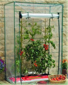 12 DIY Mini Greenhouse To Grow Plants In A limited Space.