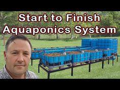 4 Easy Steps to Set-Up Your Own Backyard Aquaponics System - Tools And Tricks Club Aquaponics System, Hydroponic Farming, Aquaponics Greenhouse, Hydroponic Growing, Aquaponics Fish, Fish Farming, Aquaponics Supplies, Diy Hydroponics, Indoor Aquaponics