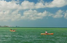Kayaking near Tampa in St. Pete/Clearwater