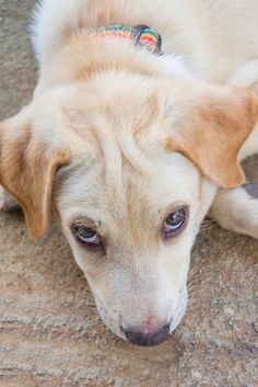 Can dogs suffer from dry eyes like humans do?