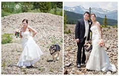 The bride and her dog make their way over to do the first look on a bright sunny summer day in Breckenridge, Colorado.  This location was just past the Country Boy Mine on French Gulch Road.  - April O'Hare Photography http://www.apriloharephotography.com #Breckenridge #Colorado #ColoradoWedding #BreckenridgeWedding #BreckWedding #MountainViewWedding