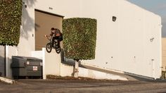 BMX - BSD: Reed Stark's California Safari