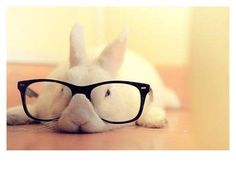 RT @bunnybuddhism: A bunny can only teach others when she is able to teach herself.