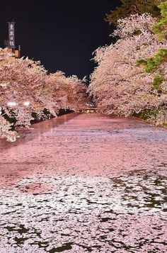 Travel Inspiration for Japan - Cherry blossoms float, Hirosaki Castle, Aomori, Japan Aomori, Beautiful World, Beautiful Places, Beautiful Scenery, Beautiful Park, Beautiful Pictures, Natur Wallpaper, Places To Travel, Places To Visit