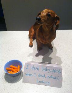 carrot-thief