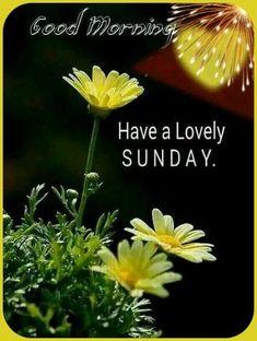 Sunday, Plants, Domingo, Plant, Planets