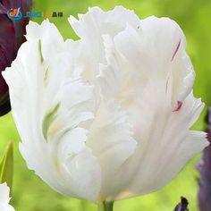 попугайные тюльпаны фото: 21 тыс изображений найдено в Яндекс.Картинках