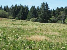 The meadows Gotts Island Maine