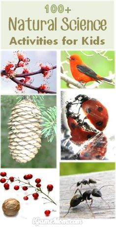 More than 100 natural science activities for kids from preschool to high school: water, ice, weather, seed, flower, pine cone, … wonderful STEM resource to keep kids busy all year long. All are simple science experiments, for your science study in the classroom, or at home in the backyard, in the garden, or in the kitchen, great for sparking children's scientific curiosity and fostering the love of nature.