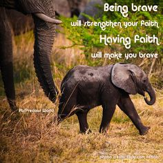 Being brave will strengthen your faith. Having faith will make you brave. baby elephant