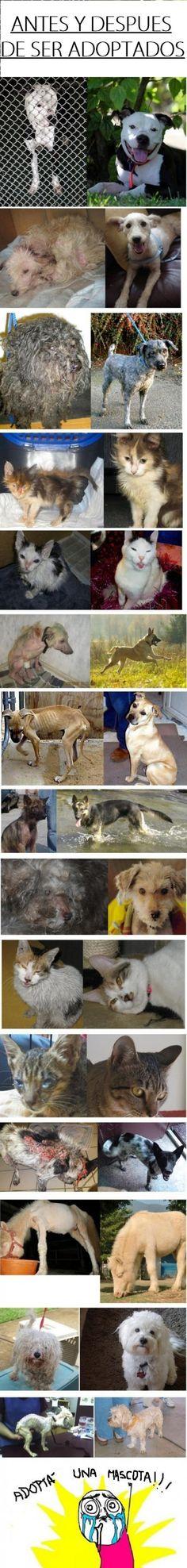 Antes y después de ser adoptados :')