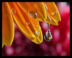 rosee-perlee-douce-1809631e76