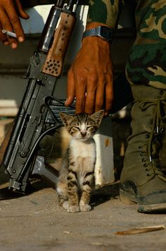 Soldiers and kittens