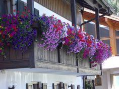 NapadyNavody.sk | Ako sa starať o muškáty čo najlepšie, aby sa vám odmenili bohatými žiariacimi kvetmi Floral Wreath, Wreaths, Plants, Home Decor, Homemade Home Decor, Door Wreaths, Flora, Deco Mesh Wreaths, Plant