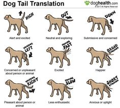 Dog Agility Dog tail movement and position can be quite expressive. Dogs Tumblr, Dog Body Language, Dog Information, Info Dog, Dog Training Tips, Agility Training, Training Pads, Training Classes, Potty Training