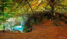 Colorful forest 2 by Jokin Romero on 500px