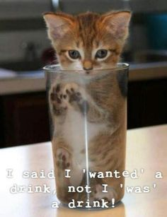 A glass of cat, please.