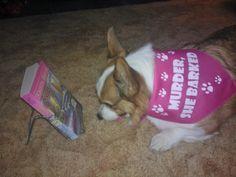 Phoebe! Dog Cat, Corgi, Pets, Street, Corgis, Roads