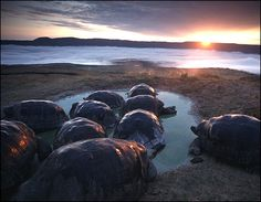 Galapagos Islands- so excited to travel here someday!