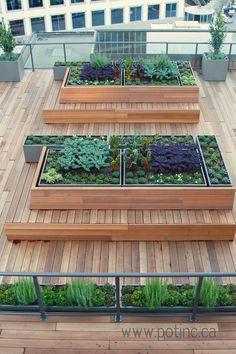 Vancouver Rooftop Vegetable Garden