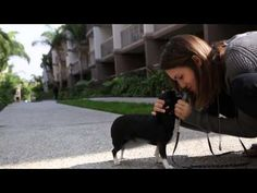 """Vampire Diaries' Torrey DeVitto and her adopted shelter dog featured in new """"Meet My Shelter Pet"""" online video"""