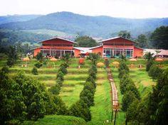 Kebun Ngebruk, Jawa Tengah #PINdonesia