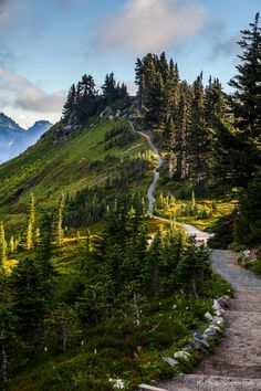 Alta Vista Trail, Mt. Rainier by Tommy Farnsworth on 500px