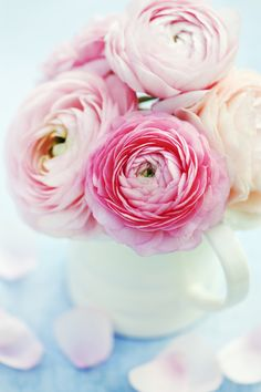 Lovely pink Ranunculus in a white ceramic cream jug