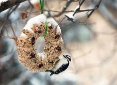 Help Feed the Birds With a DIY Wreath | Audubon