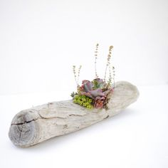 Custom succulent drift wood arrangement by Dalla Vita. Great gift for beach lovers!
