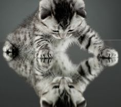 kittens looking in mirrors - Google Search