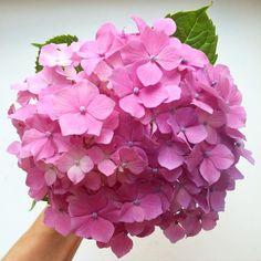 「Retrouver Paris mais garder en tête les jolies fleurs du jardin  #lavieenrose」