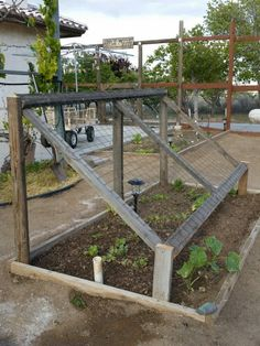 Up cycled cucumber trellis.   By Anna Schambers Spring 2015