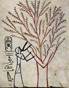Tomb of Thutmosis III, The King is fed from the Holy Tree–Lady of the Sycamore- c. 1500-1450 BCE