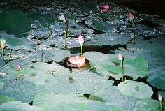 A nude woman floats in a pond full of water lilies. Ren Hang on nature, nudity… Columbine Smille, Ren Hang, Art Chinois, Wow Art, Art Graphique, Weird World, Art Direction, Art Inspo, Portrait Photography