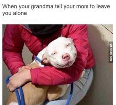 Uplifting So You Want A American Pit Bull Terrier Ideas. Fabulous So You Want A American Pit Bull Terrier Ideas. Funny Animal Memes, Funny Animals, Cute Animals, Animals Dog, I Love Dogs, Puppy Love, Cute Dogs, Pitbull Terrier, Bull Terriers