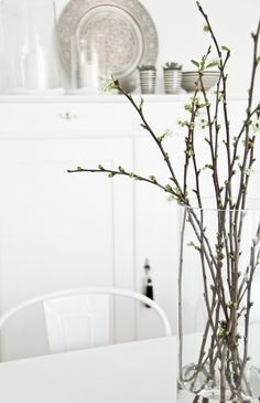 force bloom some branches, pear, dogwood for a bit of SPRING in your home