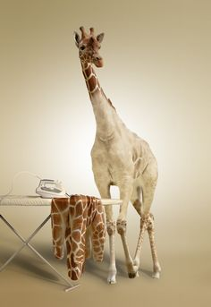 girrafes in clothes | Giraffe ironing clothes « lamwenjie
