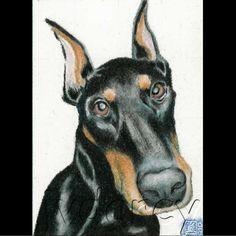 Mimi  Doberman Pinscher Dog Art Print of Colored Pencil by jvdarcy, $8.00