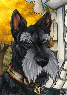 Can you identify this famous Scottish Terrier?   Scottish Terrier and Dog News