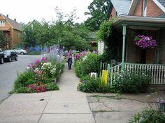A Summer Street hellstrip found on Garden Walk Buffalo. One of my favorite streets in the city!